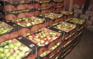 Россия может запретить ввоз яблок из Сербии