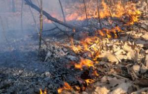 В Амурской области введен режим ЧС из-за лесных пожаров