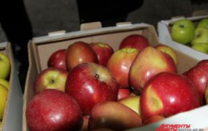 Россия будет проверять подлинность сербских яблок на границе