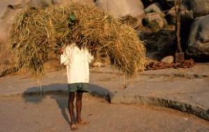 Жертвами аномальной жары в Индии стали 500 человек