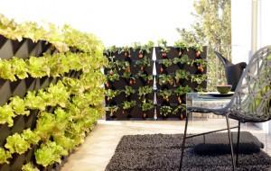 Домашний вертикальный сад своими руками