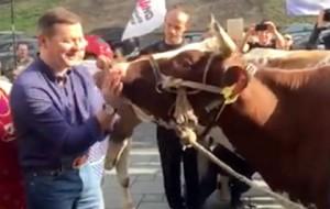 Ляшко возглавил стадо коров на митинге в Киеве