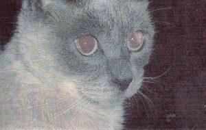 30-летний кот попал в Книгу рекордов Гиннесса