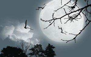 Индия отправит первую частную экспедицию на Луну