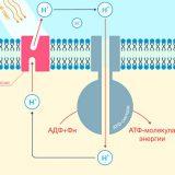 Российские физики создали необычный метод расщепления воды