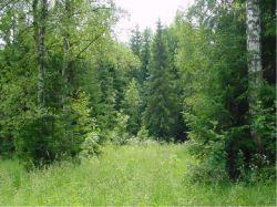 Россияне не до конца поняли суть «лесной амнистии»