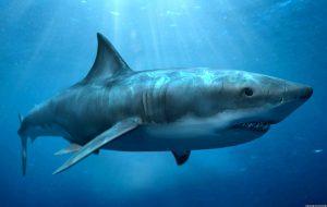 Дроны предупредят туристов в Австралии об акулах