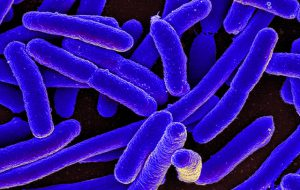Увеличение расстояния между мембранами сделало бактерии уязвимыми для антибиотиков
