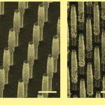 Химики подняли эффективность фотоэлектрохимических ячеек выше десяти процентов
