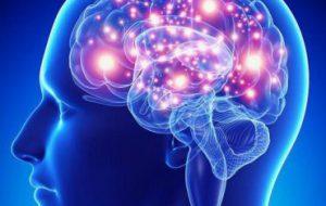 Биологи ИТЭБ РАН предложили способ лечения височной эпилепсии
