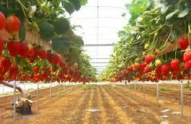 Выращивать урожай в теплице