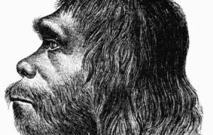 Ученые создали первую 3D-модель мозга неандертальца