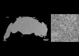Электронный микроскоп позволил получить полное 3D-изображение мозга дрозофилы