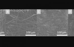 В ТПУ разработали биодеградируемый полимер для регенеративной медицины