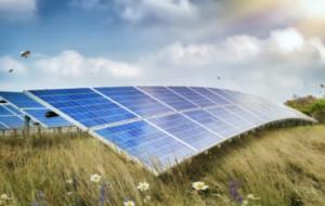 Может ли солнечная энергия спасти пчел?