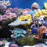 Открыт новый вид кораллов