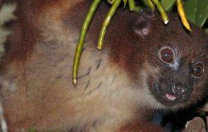 Сильный запах спелых фруктов связан с острым обонянием животных