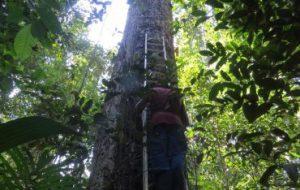 Экосистема тропических лесов Амазонки меняется из-за глобального потепления