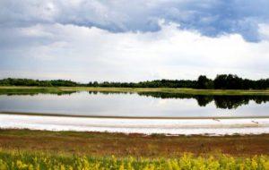 Учёные МГУ открыли новый род бактерий в гиперсолёном содовом озере на Алтае