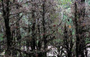 Исследователи ИПЭЭ РАН научились предсказывать атаки насекомых
