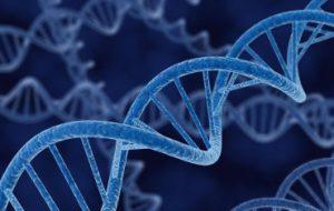 В референсном геноме человека отсутствует 30 миллионов кусочков ДНК