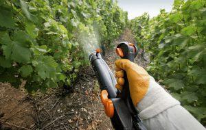 Фунгициды: специализированные средства для защиты растений от заболеваний