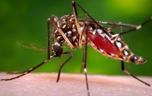 МИД предупреждает россиян о лихорадке денге в Бразилии