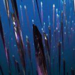 Ученые открыли новые виды глубоководных животных у побережья Коста-Рики