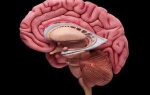 Обнаружена неожиданная связь между эндокринной системой и памятью