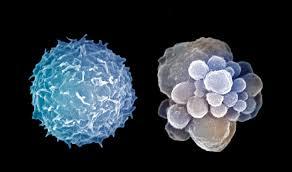 Старые клетки вредят окружающим из-за «прыгающих генов»