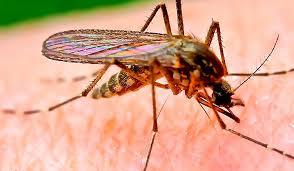 МИД предупредил туристов о вспышке денге во Вьетнаме