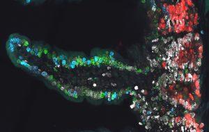 У учёных появился «третий глаз» для наблюдения за стволовыми клетками