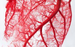 В ИОФ РАН разработали метод оценки состояния сосудов по параметрам кровотока
