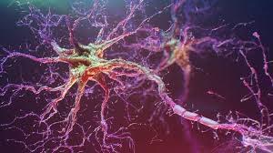 Оптогенетика получит новый молекулярный «стартер»