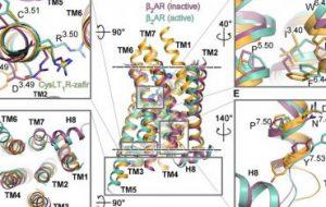 Исследователи из РФ и их коллеги из-за рубежа изучили работу лекарства от астмы на клеточном уровне