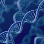 Ученые используют «мусорную» ДНК для лечения рака простаты