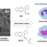 Новый материал для регенеративной медицины, способный управлять иммунным ответом клеток