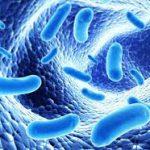 Кишечная микрофлора россиян может содержать потенциально опасные виды бактерий, устойчивые к антибиотикам