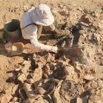 """В """"Херсонесе Таврическом"""" готовят выставку предметов из античного укрепления под Севастополем"""