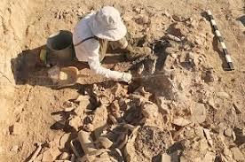 В «Херсонесе Таврическом» готовят выставку предметов из античного укрепления под Севастополем