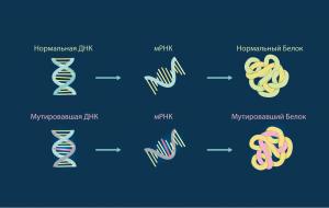 Учёные: По белкам-мутантам можно найти уязвимость раковой опухоли