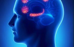 Йельские исследователи обнаружили, где живет стресс
