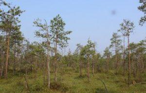 Пыльца с болот Прикамья помогла ученым реконструировать изменение климата в центральной части Урала