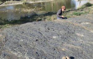 В Австралии найден новый вид ископаемых растений