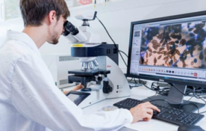 Ученые ДВФУ и ДВО РАН выделили из морской звезды новые противоопухолевые вещества