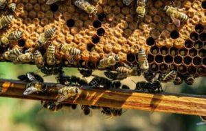 Пчёлы будут жить