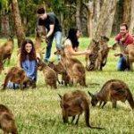 Контакт с людьми изменил инстинкты животных
