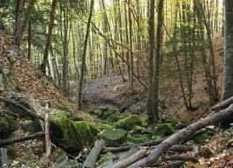 В России займутся инвентаризацией лесов