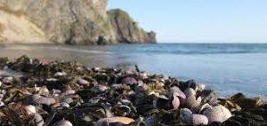 Власти Камчатки назвали три возможные причины загрязнения воды в регионе