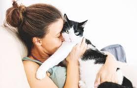 Исследователи создадут первую в мире вакцину против аллергии на кошек